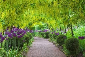 The Dorothy Clive Garden